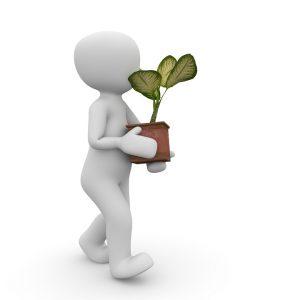Remedios caseros plantas