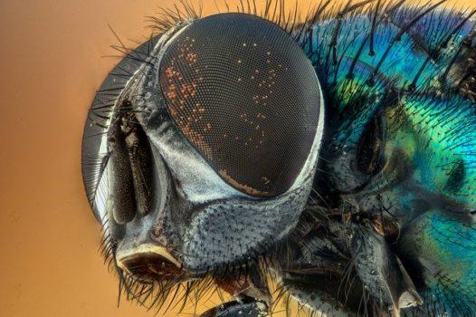 Cómo espantar moscas: truco casero